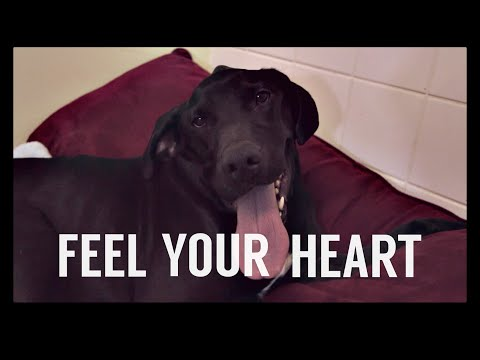 Everglow - Feel Your Heart (Official Lyric Video)
