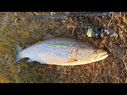 Seatrout Fishing in Estonia