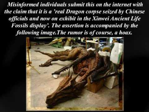 Real Dragon Fossil Mummy?