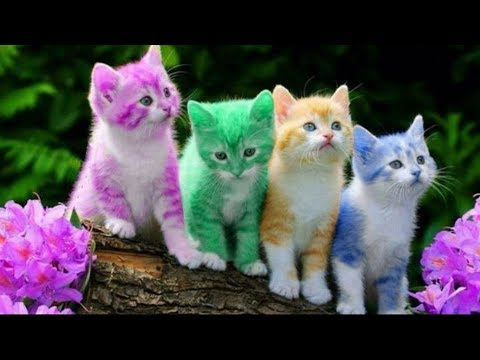 10 Most Beautiful Cat Breeds In The World