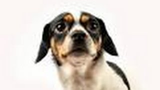 Fearful Dog, Fear Aggression In Dogs