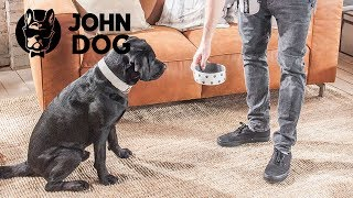Jak nauczyć psa czekania na miskę - John Dog