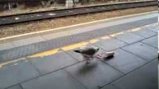Death by train Arriva Trains Wales style  Seagull eating burger king gets hit by 150282 in Cardiff Centrall     Good Idea