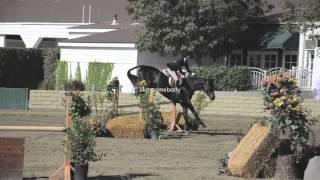 [equestrian passion]