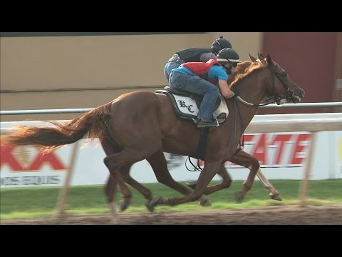 Hip #80 OK City Summer Sale - Workout at Remington Park