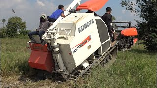 Kubota CD 70G Plus Harvesting - Cutting rice machine - Agriculture crop machine មាស៊ីនច្រូតស្រូវ