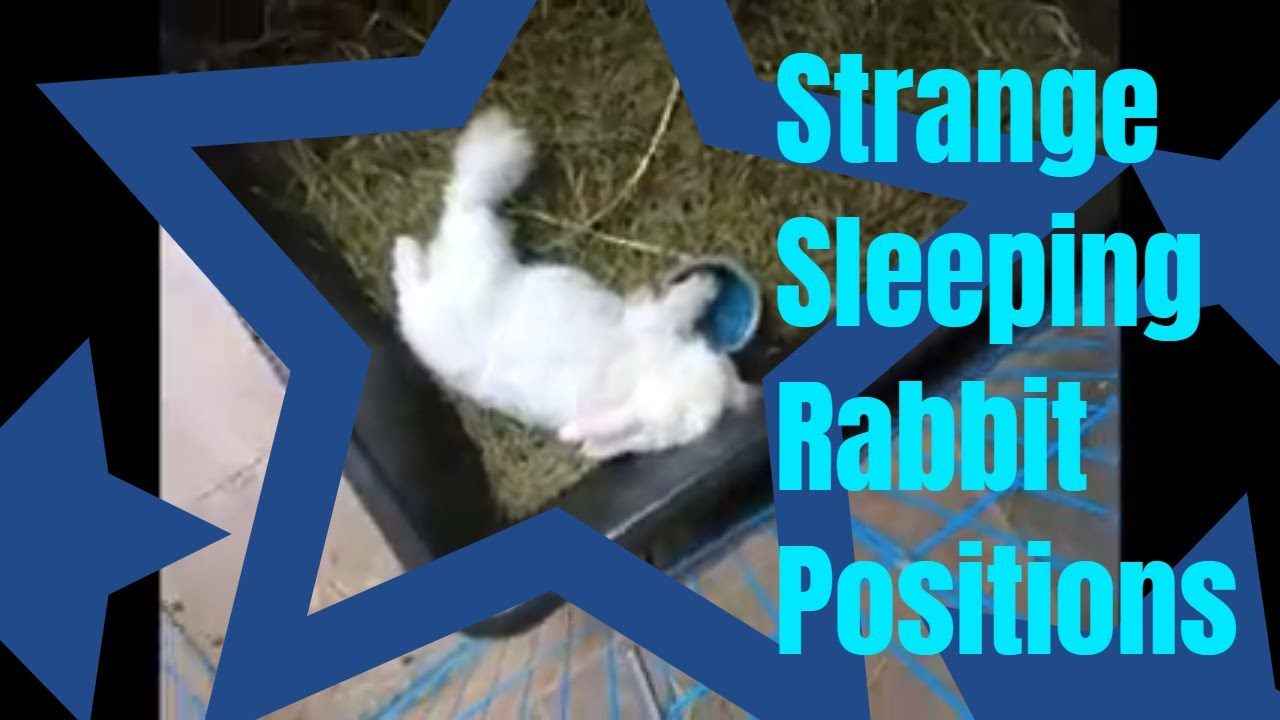 Bianca Bunny's Many Sleeping Positions