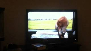 "Dog In Movie ""white Chicks"" Takes Flying Lessons"