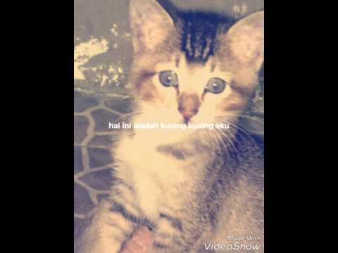 Nama nama  kucing kesayangan