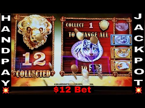Buffalo Gold Slot Machine Bonus $12 Bet 💲💲HANDPAY JACKPOT💲💲  !!! Max Bet Live Play 🤑HUGE WIN 🤑