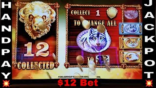 Buffalo Gold 💥HANDPAY JACKPOT💥 Slot Machine Handpay Bonus $12 Bet !!Max Bet Live Play 🤑HUGE WIN🤑