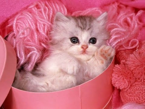 CUTEST FUNNY KITTEN VIDEOS | TRY NOT TO LAUGH CATS
