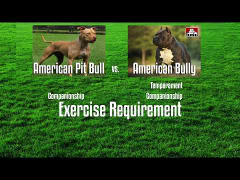 APBT VS. AMERICAN BULLY - A BUYER'S GUIDE
