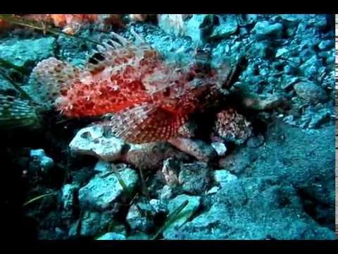 diving, scuba diving, scuba, buceo, buceo infanteria, plongee, tauchen, underwater, underwater video, videosub, sea, sea life, marine life, diving Mallorca, diving Majorca, plongee Majorque