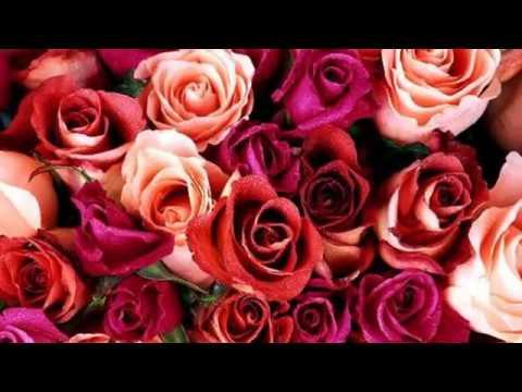 En Güzel çiçek Resimleri Youtube