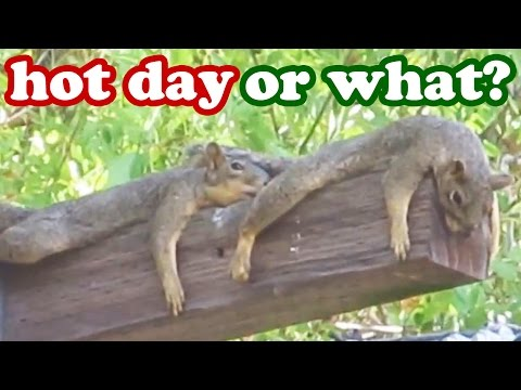 Weird Animal Behaviour - Funny Squirrel Animals Images - Wildlife Wild Life Pictures Videos Jazevox