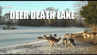 Death Lake  - Deer Fall Through Ice To Die In Frozen Water - Durham UK