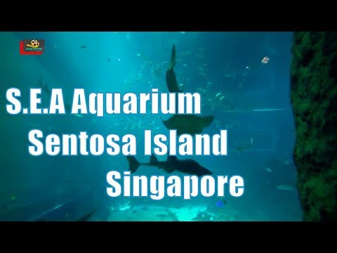 SEA Aquarium : The Marine Life Park, Resorts World Sentosa, Singapore 🇸🇬