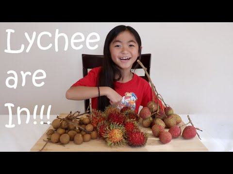 Lychee Rambutan And Longan Are In Season! Come On Down To Florida To Try These Fruits Out!
