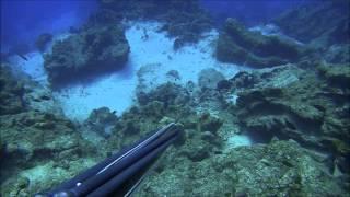 zıpkınla balık avı trofe peşinde bölüm 2