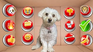 100 Mystery Buttons...Only 1 Will Let Dog Escape The Box!