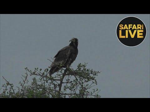 safariLIVES - Episode 15