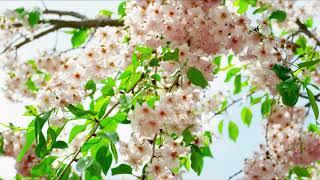 Привет, весна! - Король Лир ✬ ПРЕМЬЕРА 2020
