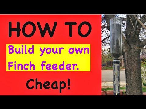 How To Build A Cheap Bird Feeder.