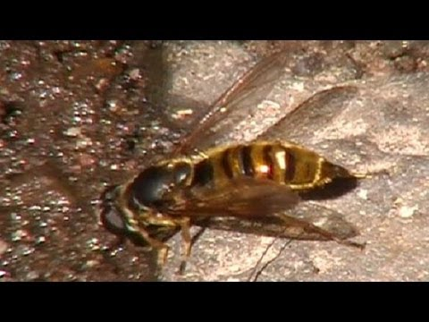 The Nature Explorers Insect and Bird Wildlife Video Clip Animal University Example School Education