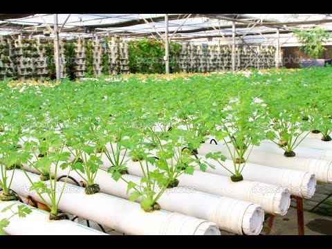 Cultivo Hidroponico Casero De Hortalizas Tvagro Por Juan Gonzalo - Cultivo-hidroponicos