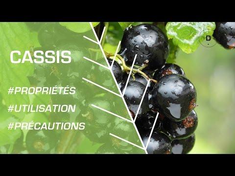 Comment utiliser le cassis ? - Phytothérapie