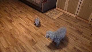 Repeat youtube video Страшнее кошки зверя нет