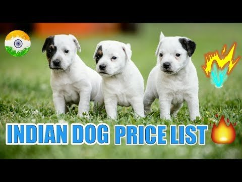 Indian Dog Price List In India | in Hindi | dog price list