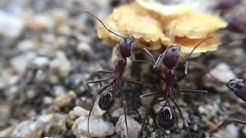 Ants in Burro Canyon | Marana, AZ | September 13, 2016