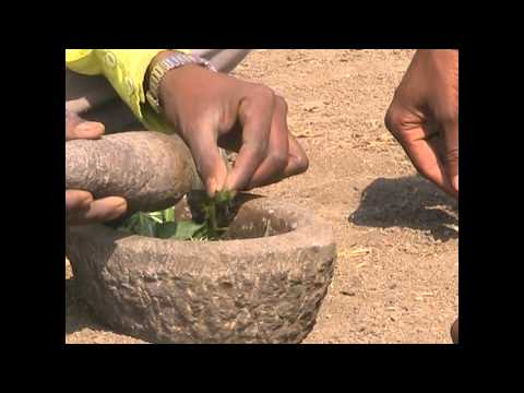 Method of Rat Control in Agriculture Field