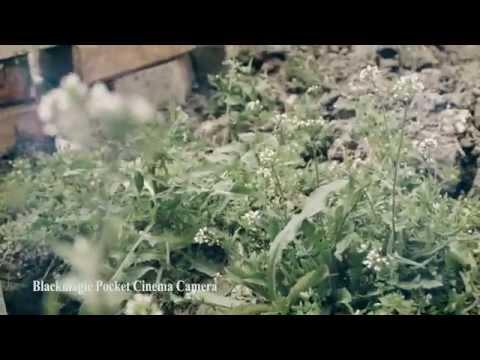 BlackMagic Pocket Cinema Camera in Baku,Absheron... (test video)