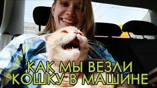 Как мы везли КОШКУ в машине к ветеринару) Стресс у животного