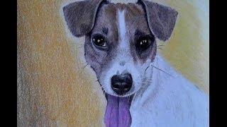 """Drawing""""Püppi""""die Jack Russell Terrier Hündin"""
