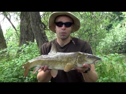 Dean Macey Fishing on the River Wye - Part 2