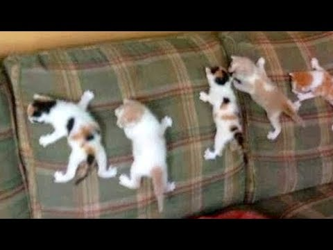 Most Hilarious Cat Moments You've Ever Imagined!