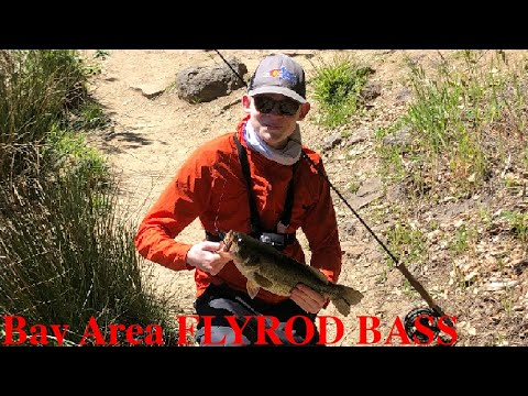 Fly Fishing BAY AREA Bass (surprise Catch!)