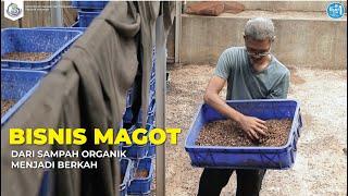 Bisnis Magot, dari Sampah Organik Menjadi Berkah