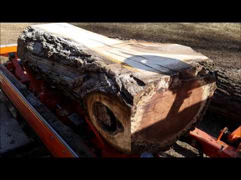 Black Walnut Slabs on the LT35 Wood Mizer
