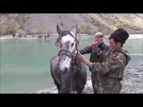 Jagen im Altai -Teil 2. Auf der Fährte von Maral und Sib. Steinbock.