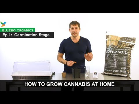 ep-1---germination-stage-instructions---craft-cannabis-@-home