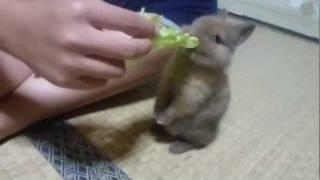 ウサギの赤ちゃん thumbnail