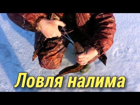 Ловля налима со льда.Рыбалка.Fishing