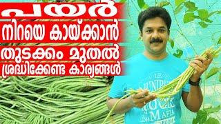 പയർ നന്നായി പൂക്കുവാനും കായ്ക്കുവാനും ചെയ്യേണ്ട കാര്യങ്ങൾ | Payar Krishi Tips Malayalam