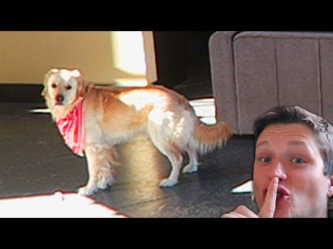 PLAYING HIDE AND SEEK! (Super Cooper Sunday #82)