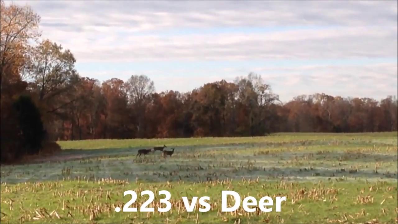 223 Vs Deer Youtube